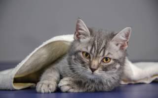 Как помочь коту при болезни