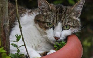 Как лечить кожный рог у кота