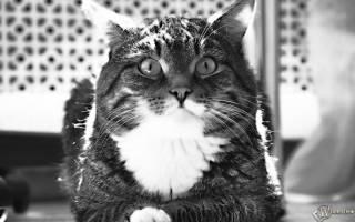 Лечащие породы кошек