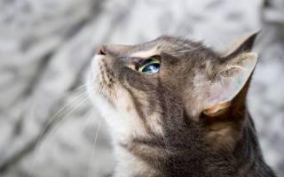 Диета при мочекаменной болезни у котов
