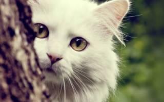 Причины ухода кошек из дома