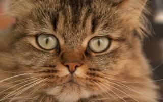 Лечение кошек после антибиотиков