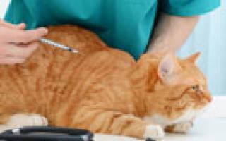 Гастроэнтерит у кошек симптомы и лечение