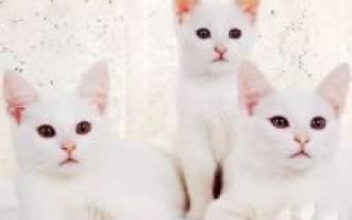 Болезни белых котов