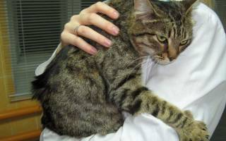 Вирус у кота чем лечить
