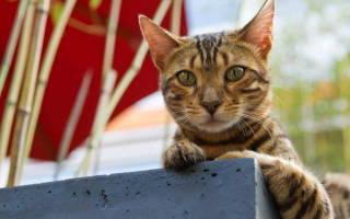 Кошка лечение микроинсульт