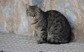 Диета коту при болезни печени