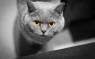 Спирохеты у кошек лечение