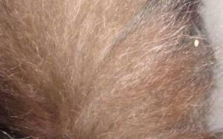 Солитер у кошек симптомы и лечение