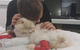 От каких болезней умирают кошки