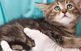 Чем можно лечить котов