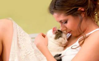 Диабет у кошек лечение