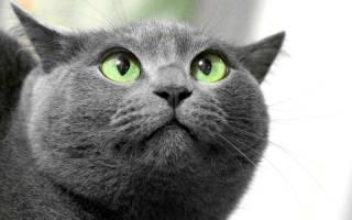 Лечение невроза у кошки