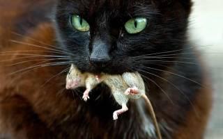 Парвовирусный энтерит у кошек симптомы лечение