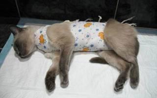 Лечение кошки после стерилизации