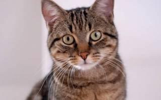 Лечение почечной недостаточности у котов народными средствами
