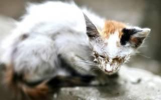 Микроспория лечение котов