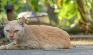Чем лечить розовый лишай у кота