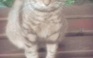 Лечение кошек красное село