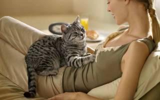 Чем лечить глисты у кошек лекарства
