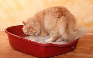 Коты после операции мочекаменной болезни