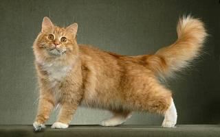 Остеохондроз у кошек лечение