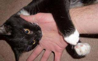 Укус кошки лечение снятие отека