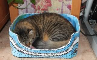 Кошка после наркоза уход