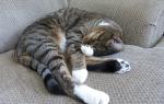 Анемия у кота как лечить