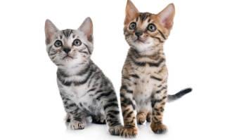 Воспитание и уход за домашними котами