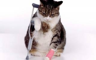 Болезни суставов у кошек