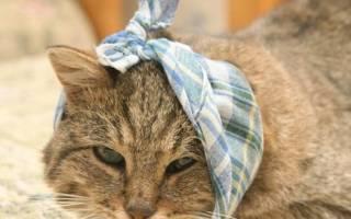 Чем лечить раны у кота после драки