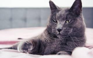 Кальций вирусная инфекция у кошек лечение
