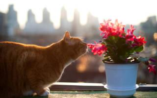 Чем лечить кота если он отравился
