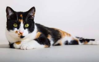 Свищ у кошки под хвостом лечение
