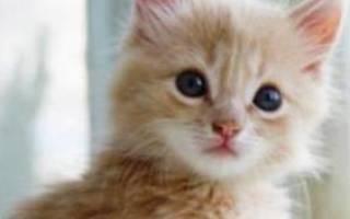 Советы по уходу за котами