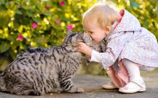Аллергия на кошек у детей лечение