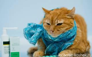 У кота насморк и чихает чем лечить