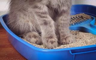 Кошка поносит чем лечить