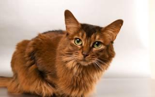 Герпес у кошек на глазах лечение