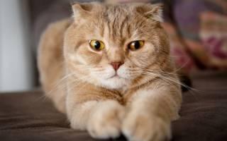 Кошки болезни стерилизация