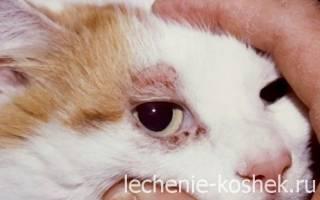 Демодекоз у кота чем лечить