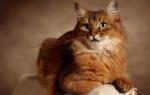 Правильный уход за котом