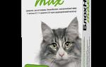 Лечение кошек от иксоидных клещей