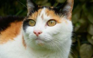 У кота текут глаза коричневым чем лечить