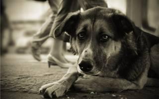 Ветеринария туберкулез у кошек симптомы лечение