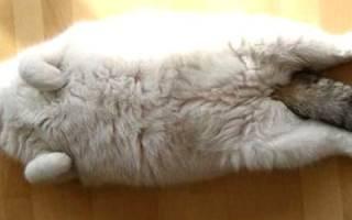 У кошки гормональный сбой как лечить