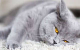 Кожные болезни у котов