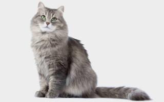 Облысение у кошек лечение