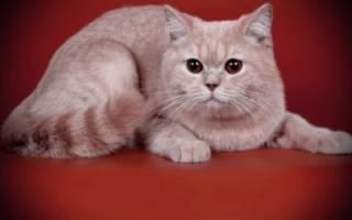 Лечение кошек тушинская